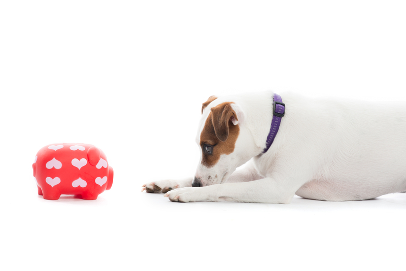 http://www.dreamstime.com/royalty-free-stock-photo-dog-piggybank-image42351175