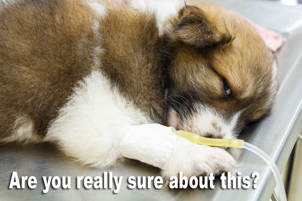 http://www.dreamstime.com/stock-photos-illness-puppy-intravenous-drip-operating-table-veterinarians-clinic-image38368453