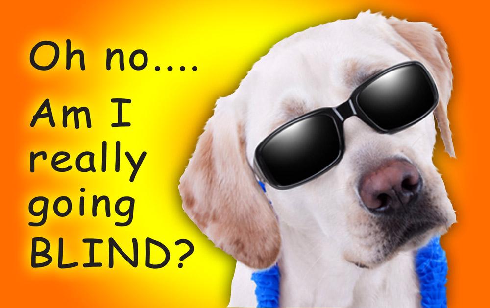 http://www.dreamstime.com/stock-photography-sunglasses-labrador-retriever-wearing-black-copy-space-image41107762
