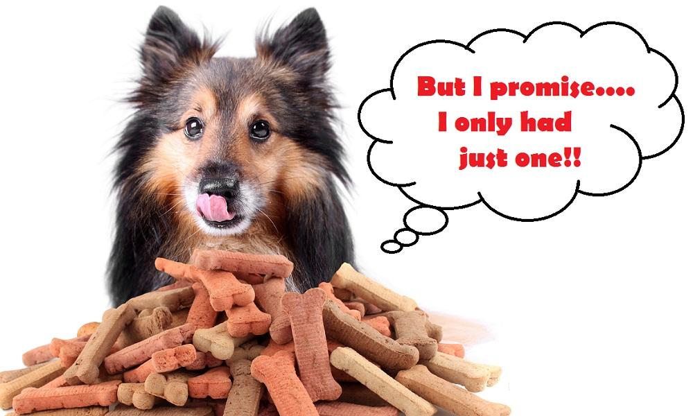 dogtoomanytreats