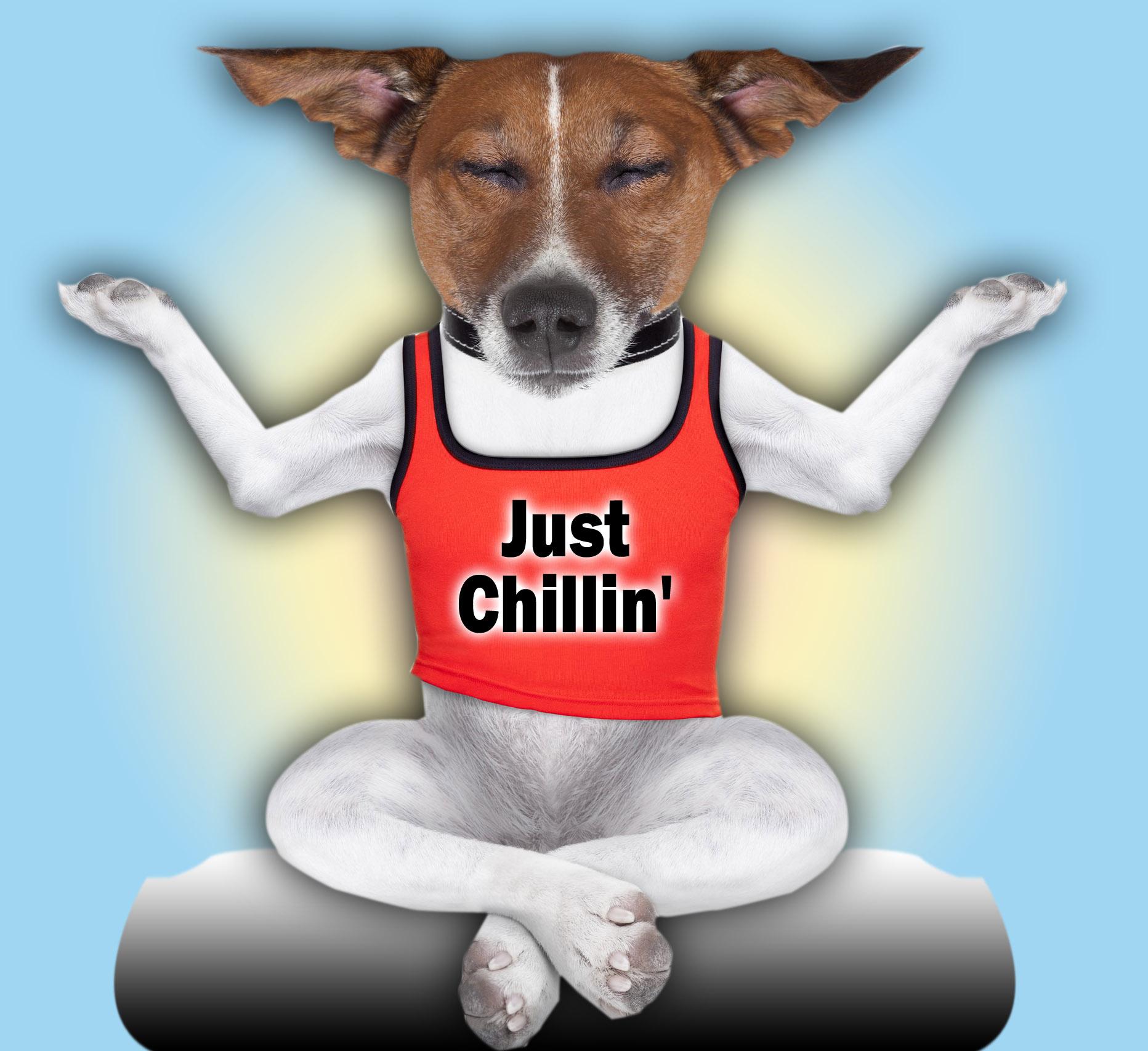 YogaDogChillin
